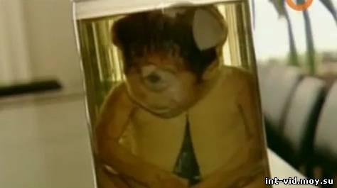 скриншот видео чернобыль мутанты